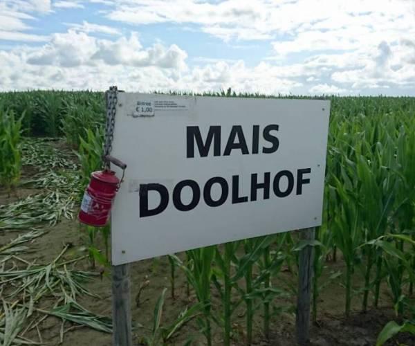 Maïsdoolhof Witmarsum eindelijk weer open