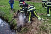 Muisje overleeft illegaal brandje bij Delfstrahuizen niet