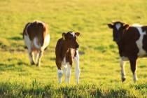 Boeren en tuinders in Friesland werken aan oplossingen droogte