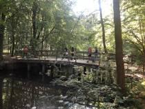 Stichting MOM organiseert wandeling in Oranjewoud voor ouders van een kind met beperking