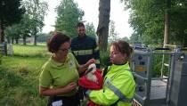Brandweer haalt verlaten ooievaarsjong uit nest in Oranjewoud