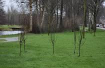 Bomenbezorgdienst Plan Boom gaat Fryslân vergroenen