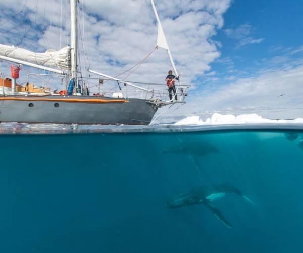 Hoor de walvissen zingen