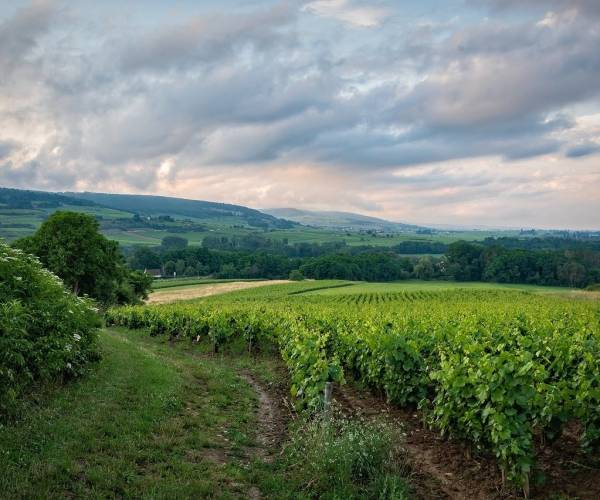 5 onmisbare locaties in Champagne!